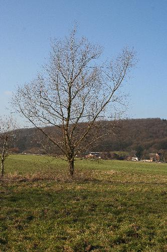 aku_kopfweiden-09