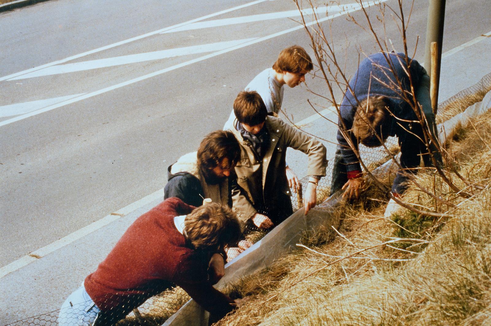 AkU-Mitglieder sammeln Kröten am Krötenzaun ein